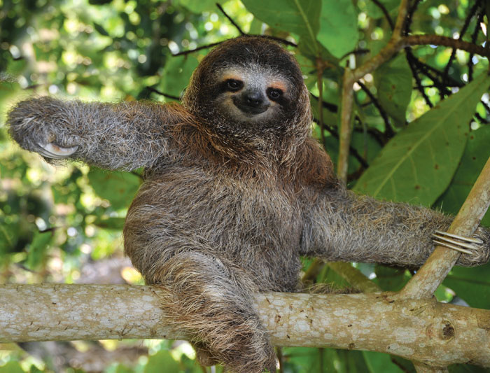 Hug a sloth in Costa Rica.  Actually don't do that.